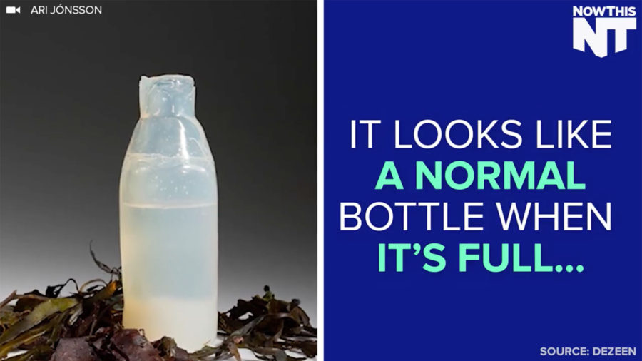 'Normal' looking plastic bottle decomposes into edible bark-like shape